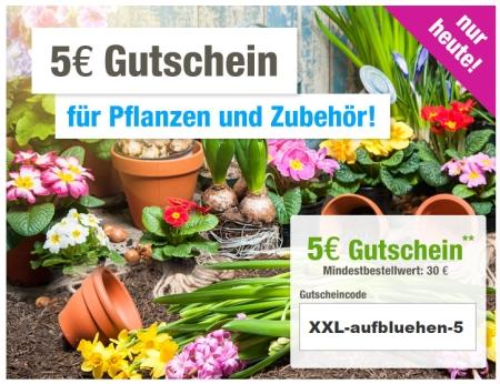 5,- Euro Gutschein mit 30,- Euro MBW auf die Kategorie Pflanzen bei GartenXXL