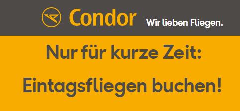 Condor Eintagsfliegen