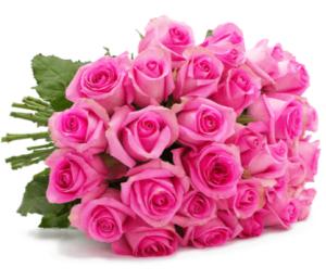 44 pinke Rosen