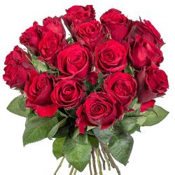 Knaller! 18 langstielige rote Rosen für nur 13,99 Euro inkl. Zustellung