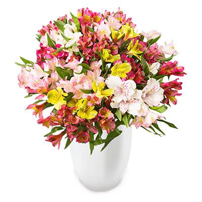 44 Inkalilien mit bis zu 400 Blüten für nur 22,98 Euro inkl. Versand