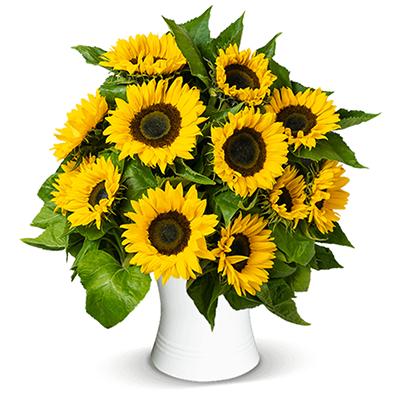 20 Sonnenblumen (60cm lang) für nur 24,98 Euro inkl. Lieferung