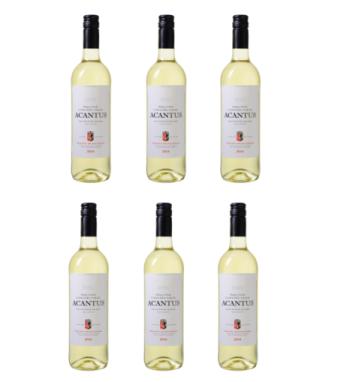 6er-Paket Bodegas y Viñedos Casa del Valle – Acantus Sauvignon Blanc nur 31,89 Euro inkl. Lieferung