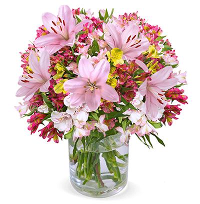 Blumenstrauß mit 18 bunte Inkalilien + 5 pinke Lilien (über 200 Blüten) für nur 24,98 Euro