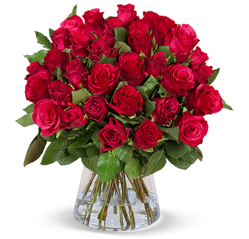 44 langstielige, rote Rosen für nur 24,95 Euro inkl. Zustellung