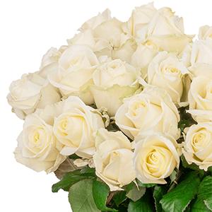 Strauß mit 23 weißen Premium-Rosen für nur 24,98 Euro inkl. Lieferung