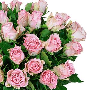 Blumenstrauß mit 28 roséfarbene Rosen für nur 24,98 Euro inkl. Lieferung