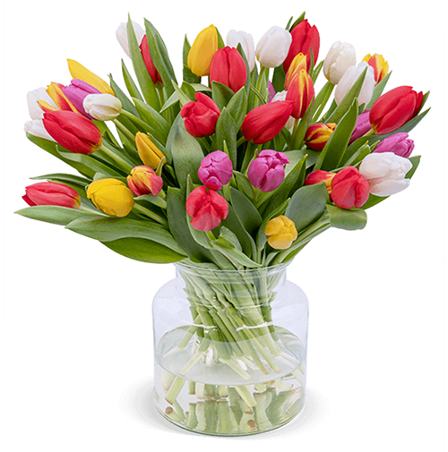 50 bunte Tulpen (40cm Länge) für nur 30,98 Euro inkl. Lieferung