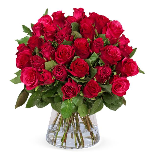 Zum Valentinstag: Strauß mit 33 roten Rosen für nur 34,73 Euro inkl. Lieferung