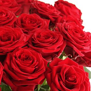 20 Red Naomi Rosen (50cm / 80 Blütenblätter pro Stiel) für nur 22,98 Euro inkl. Versand
