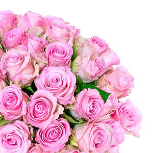 Blumenstrauß PinkDiamonds mit 35 pinken Rosen für nur 25,98€ inkl. Lieferung