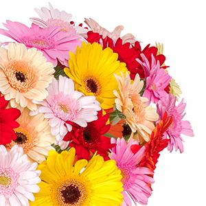 Blumenstrauß mit 40 bunten Gerbera für nur 23,98€ bei Blumeideal