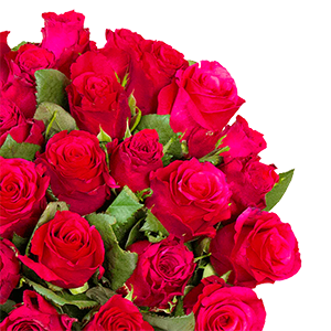 Top! 35 rote Rosen (50cm) für nur 25,98€ inkl. Lieferung