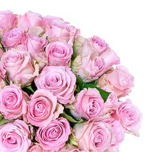 Strauß mit 40 pinke Rosen für nur 24,98 Euro inkl. Lieferung