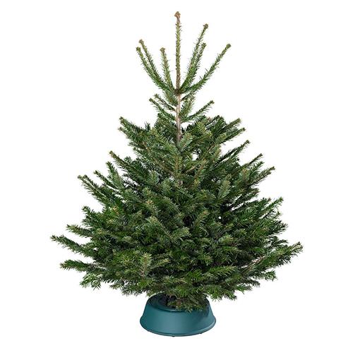 Premium-Nordmann-Tanne Weihnachtsbaum ab nur 33,92 Euro inkl. Lieferung