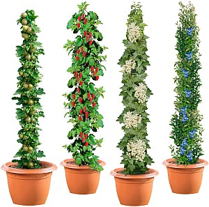 BCM Obstpflanze »Säulenobst 4er-Set«