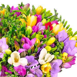 Strauß mit 50 bunte Freesien (bis zu 300 Blüten) für nur 25,98€ inkl. Versand