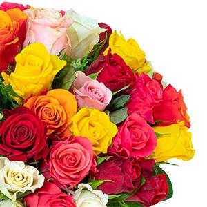 50 bunte Rosen (50 cm) für nur 28,98€ inkl. Lieferung